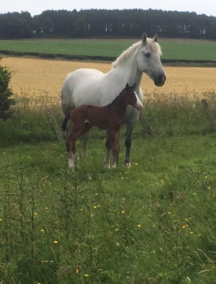 foal born in 2017