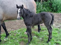 Colt born June 2013