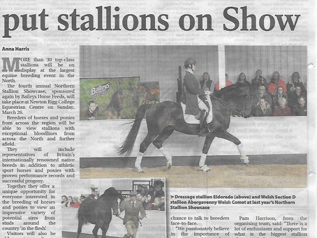Northern Stallion Showcase 2017