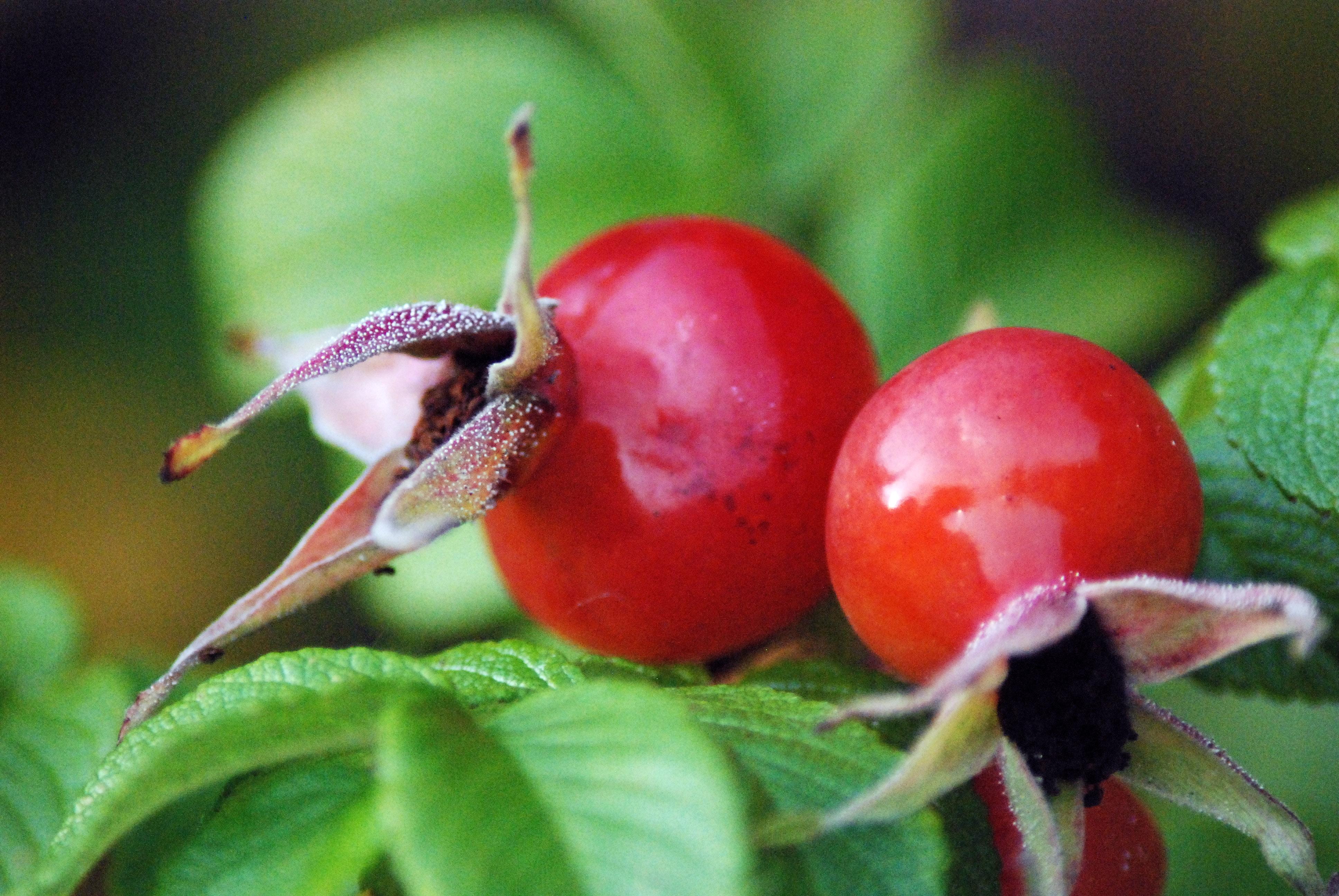 fruit de foret