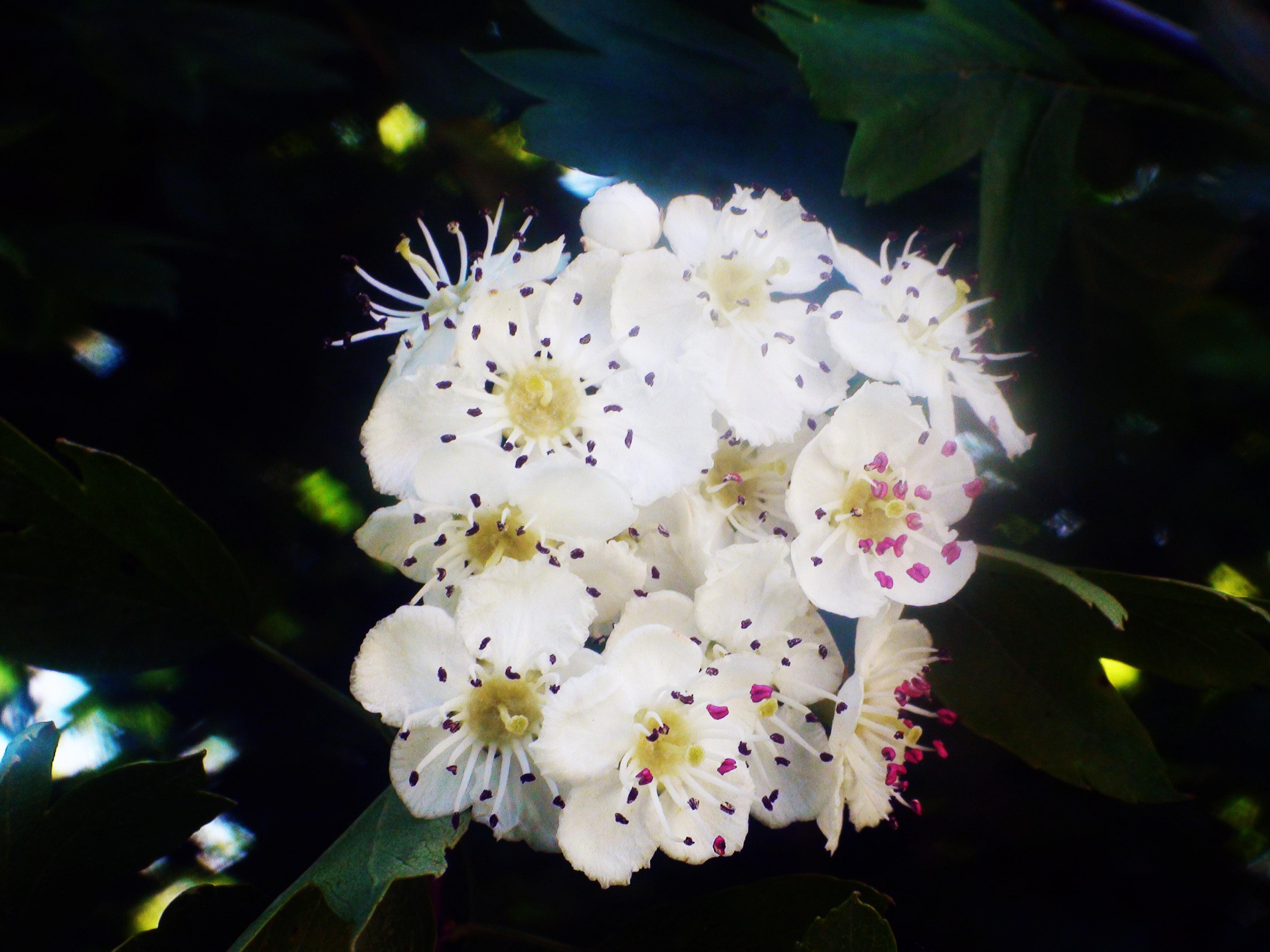 fleur sauvage 6.6