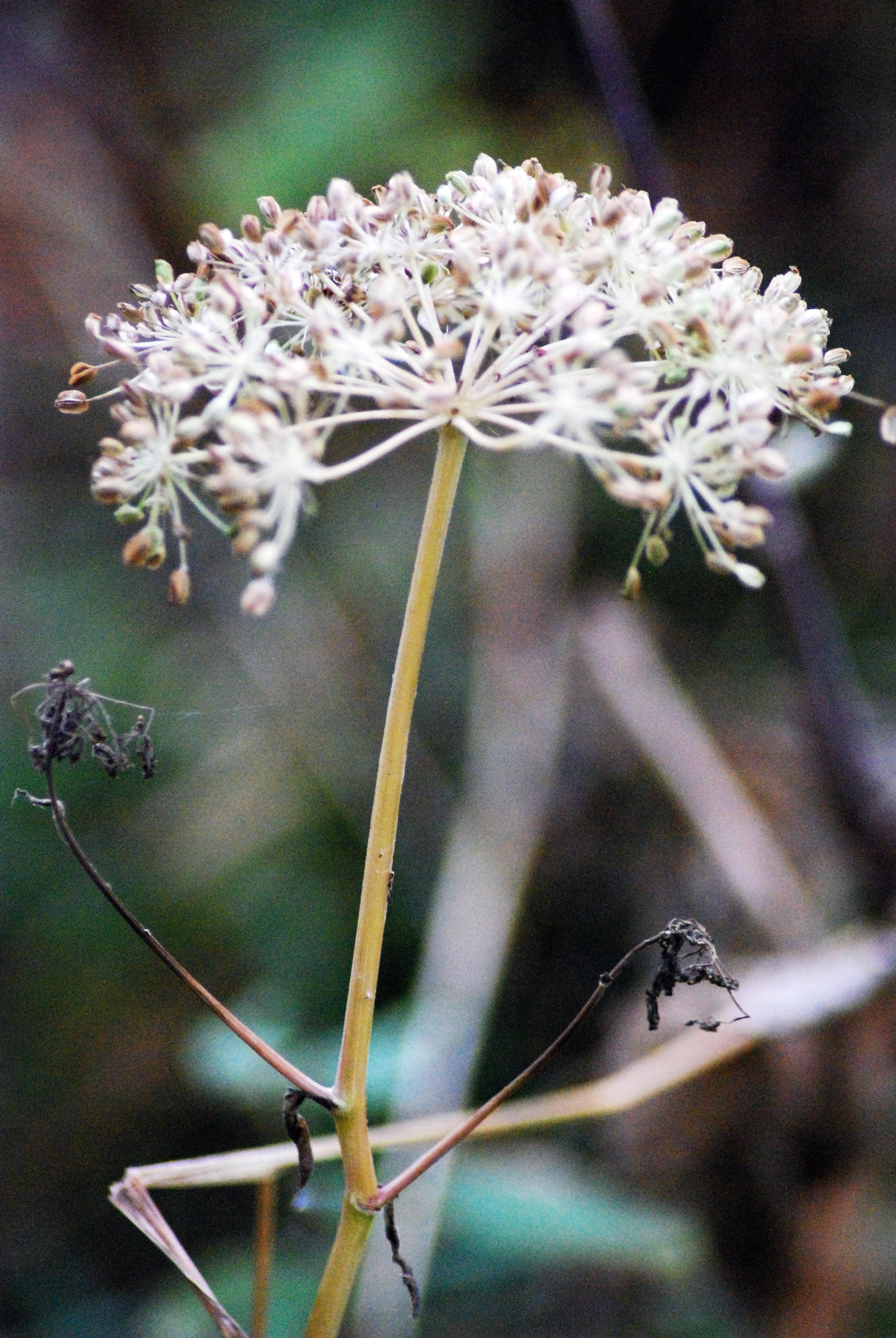 fleur de foret