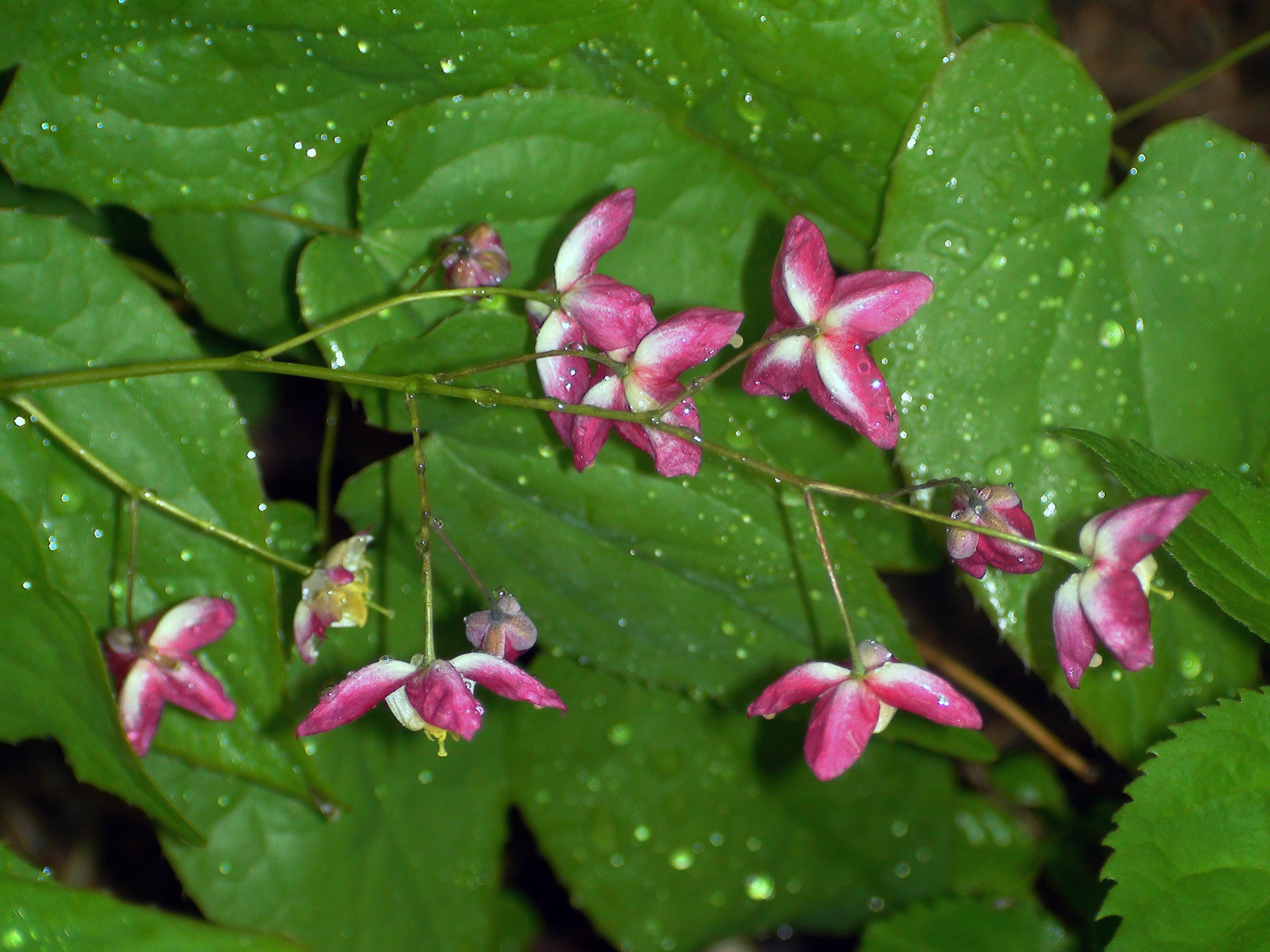 fleur sauvage 2