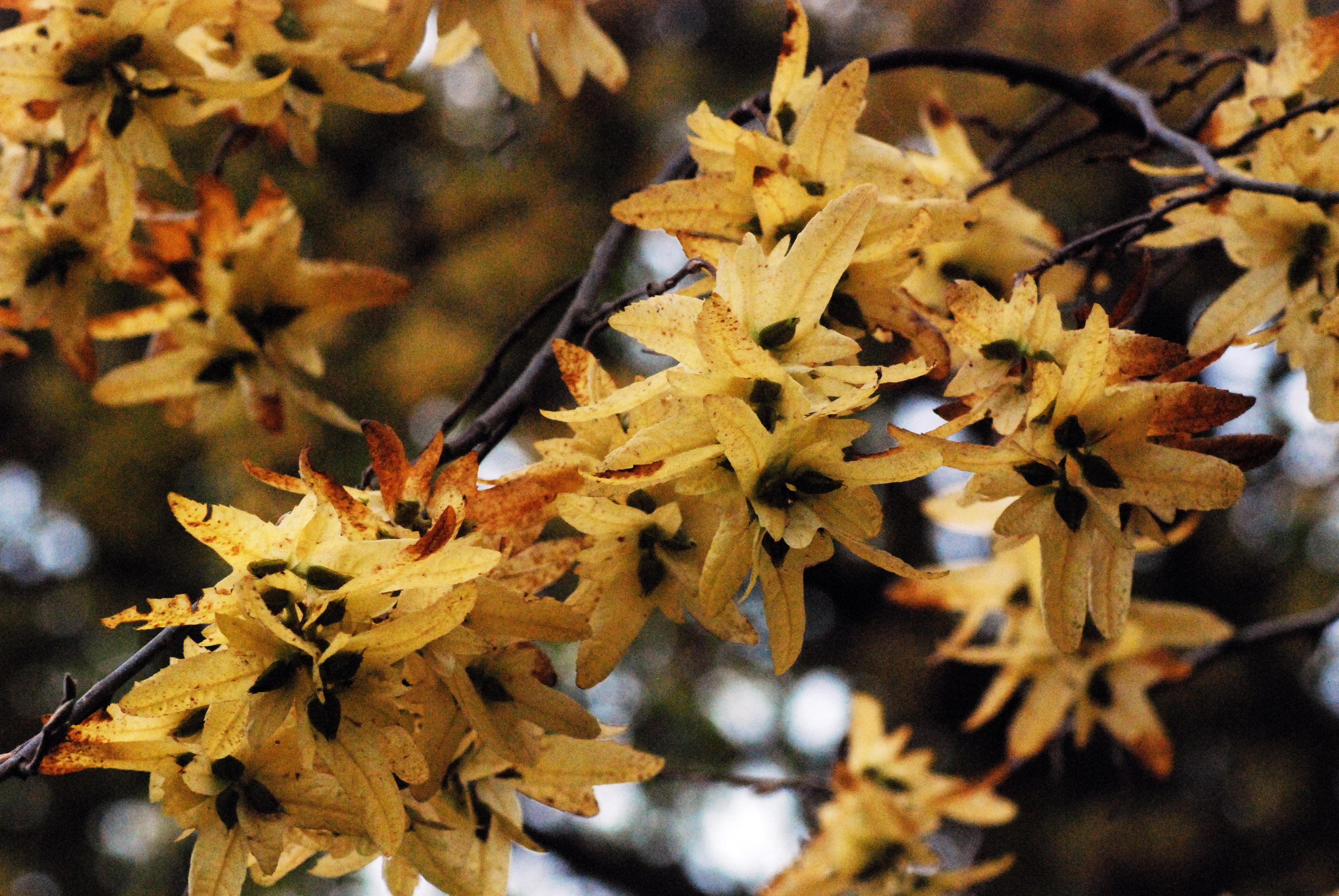 arbre a fleurs