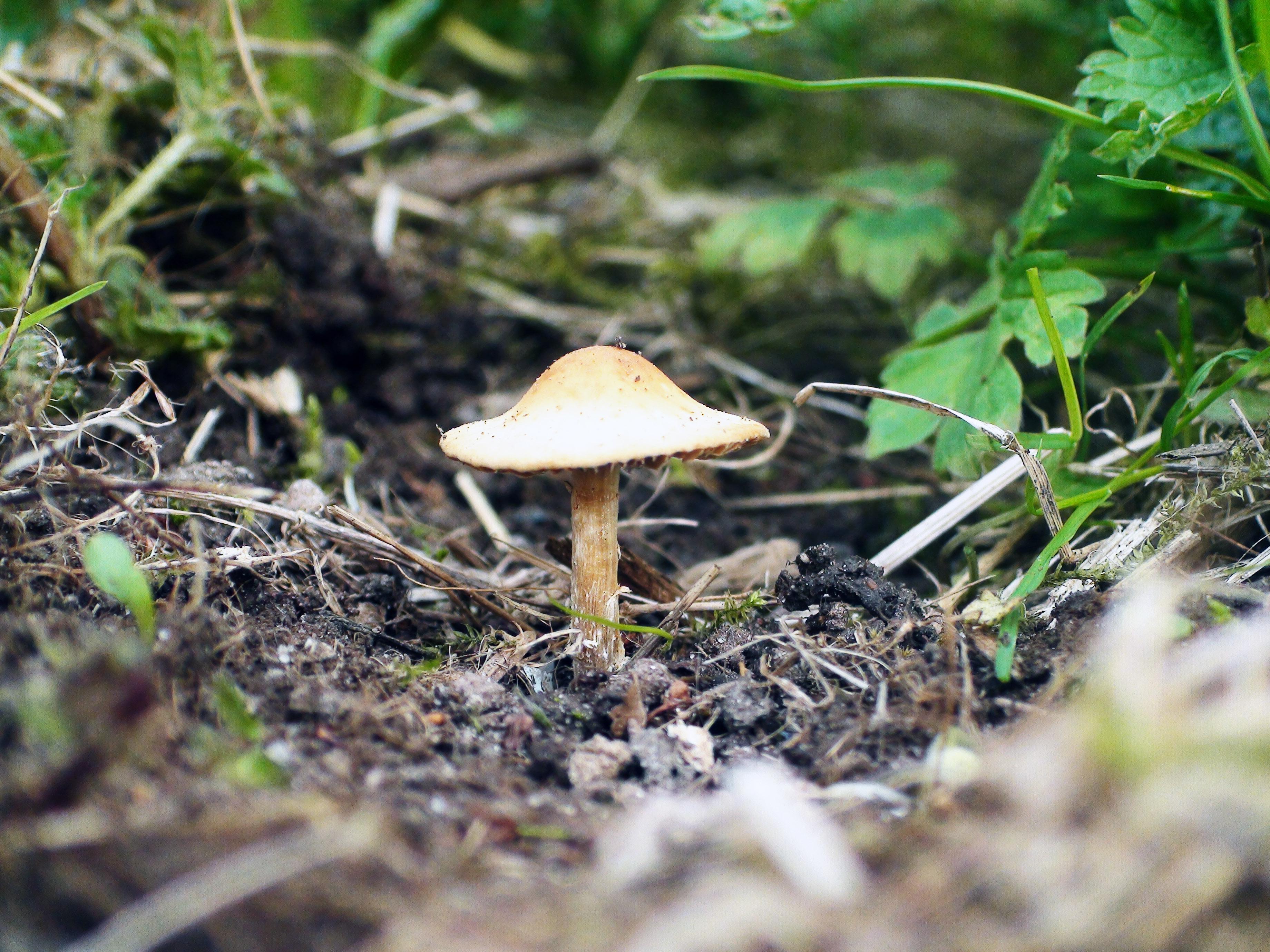 champignion de foret