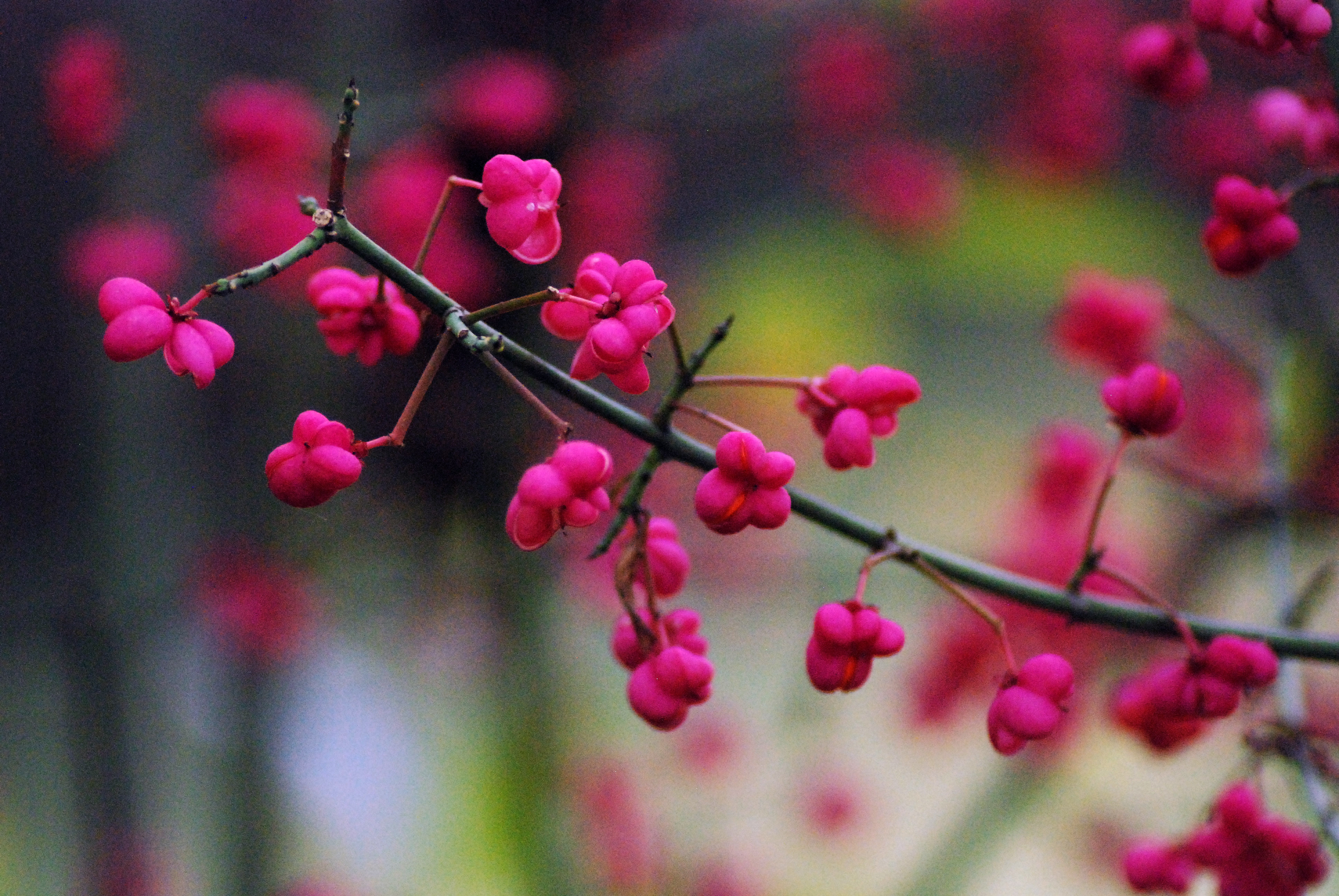 fleur de foret 5