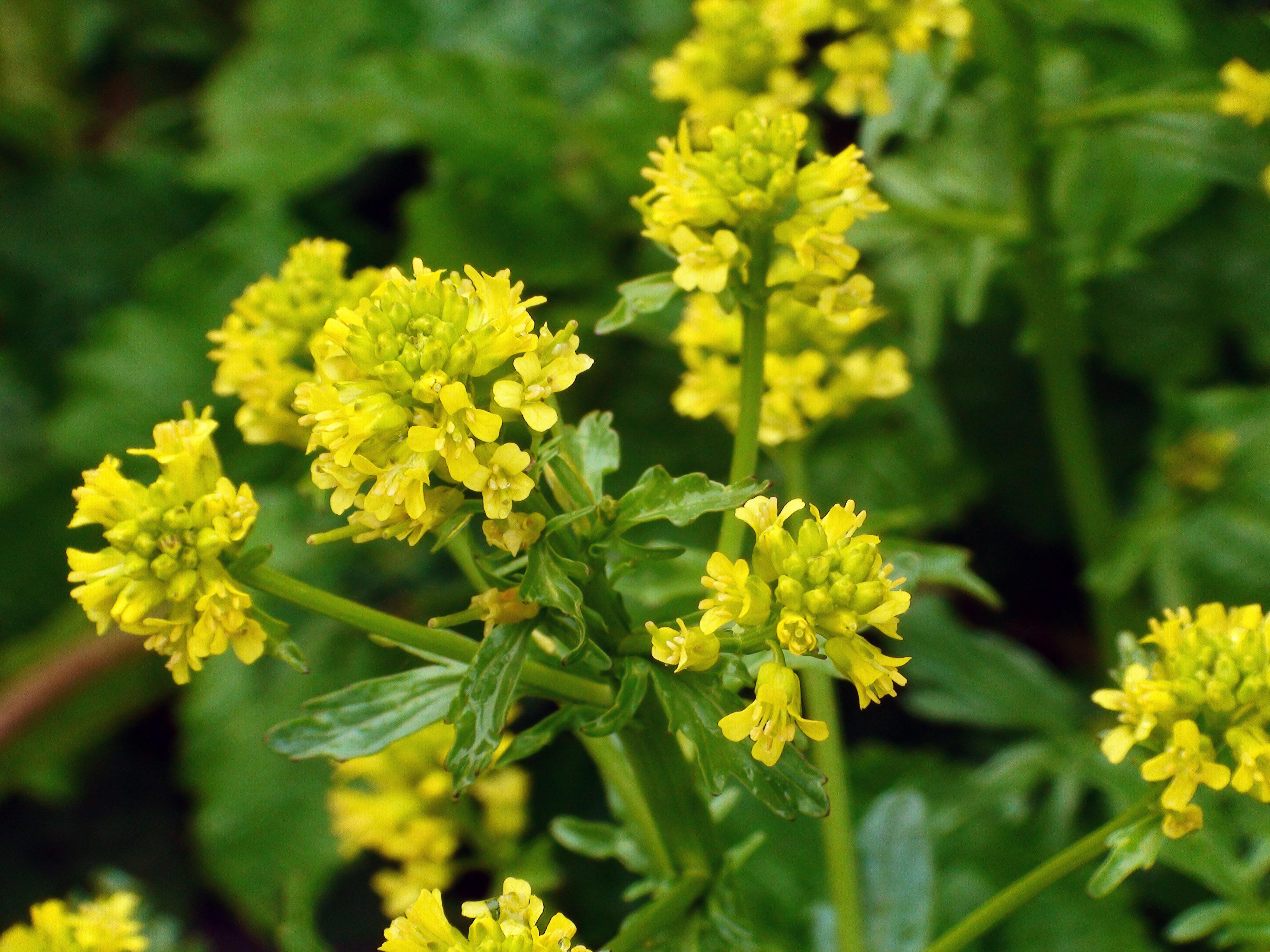 fleur sauvage 5
