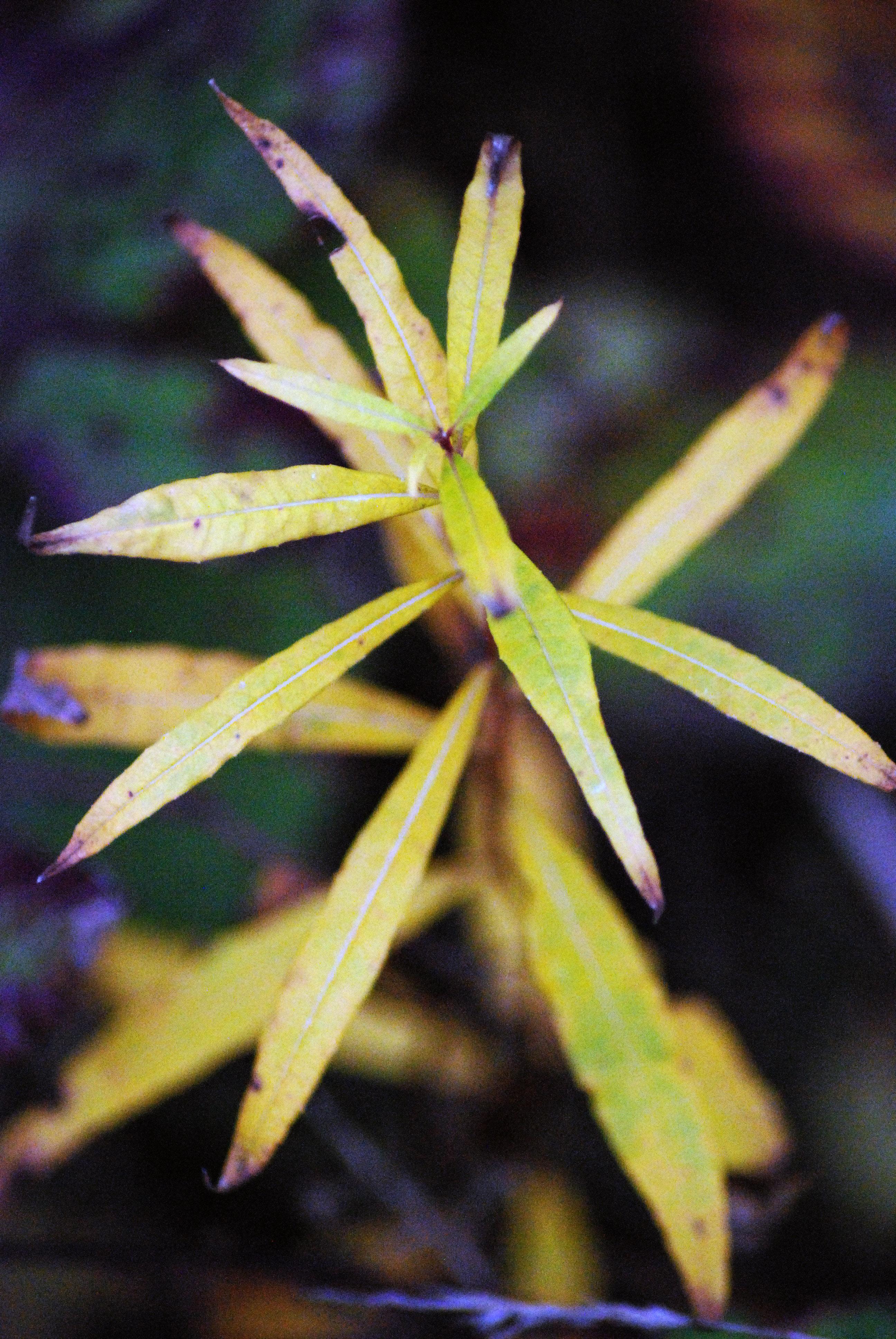 plante de foret4
