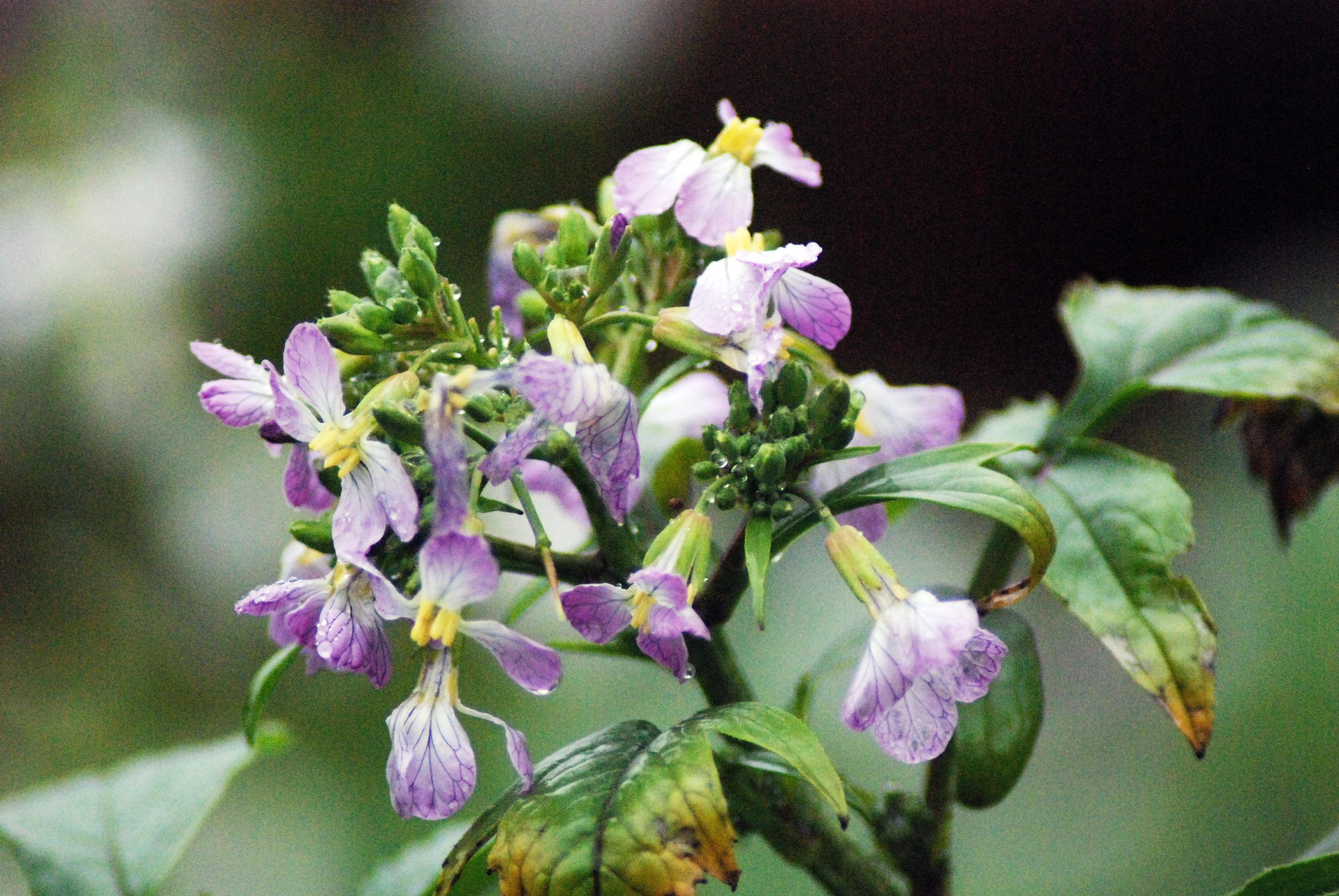 fleur sauvage 13