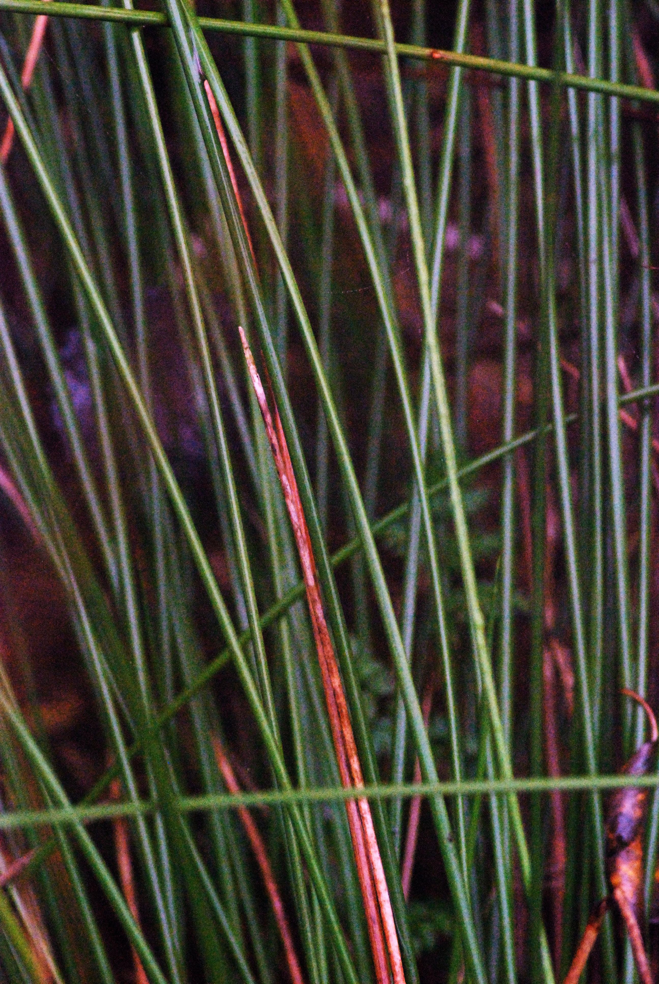 plante sauvage de foret