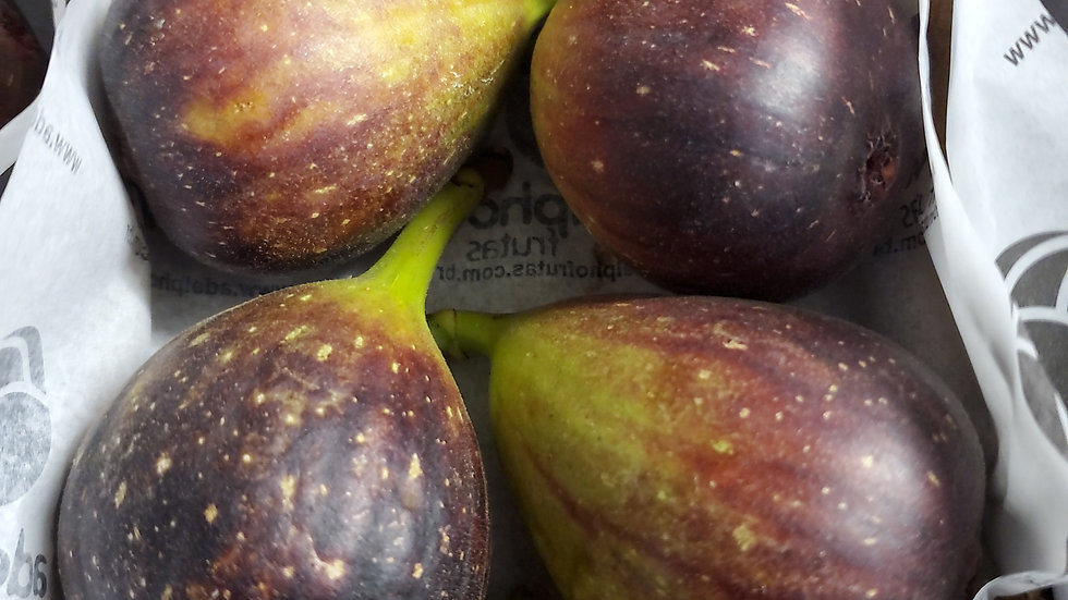 Fresh Fig (each)