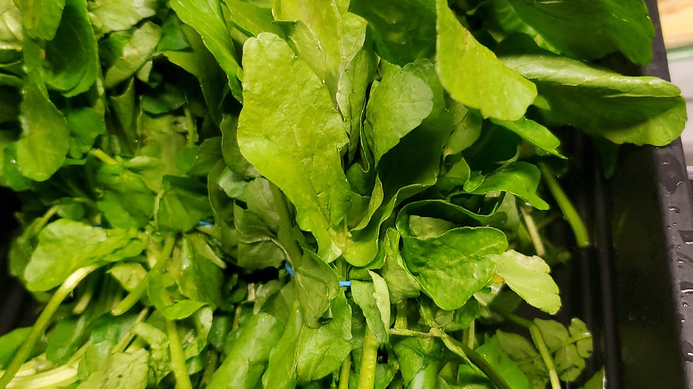 Fresh Watercress Bunch