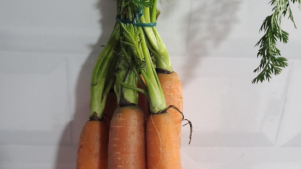 Fresh Bunch Carrots