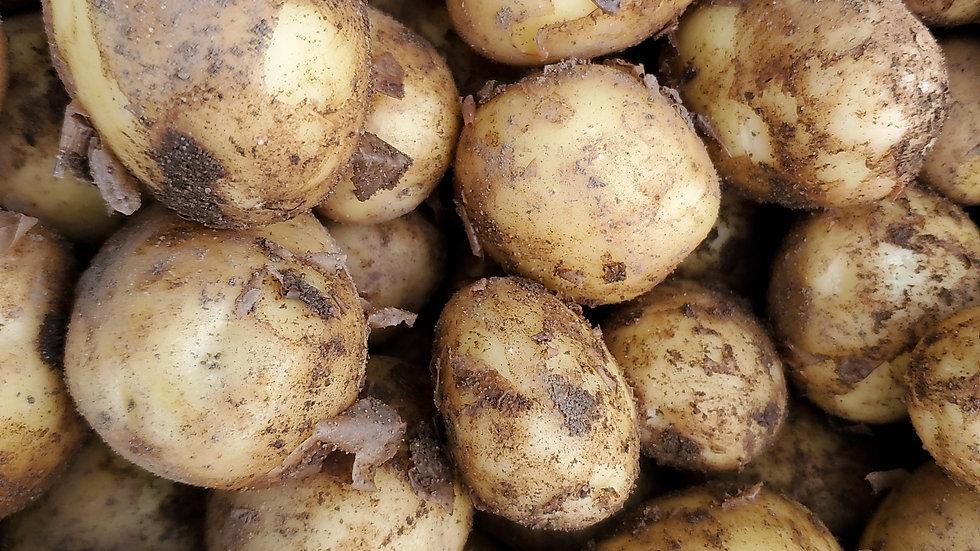 Home Grown Lady Christl New Potatoes (loose guide)1 Kilo