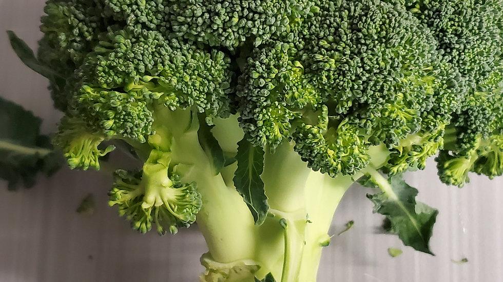 Fresh Broccoli (loose guide) 500g