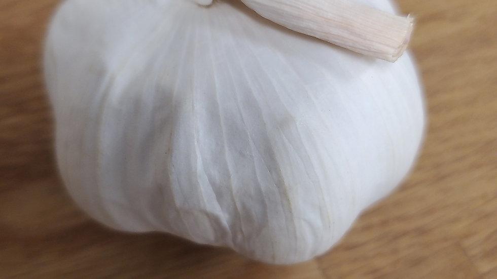 Garlic Bulb (each)