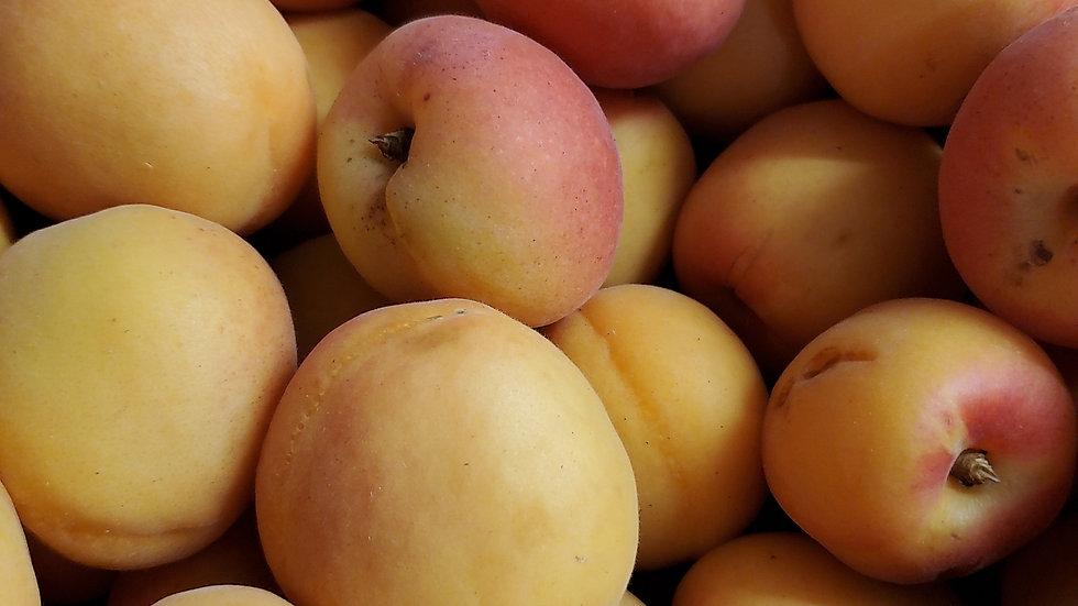 Fresh Apricots (loose) 500g