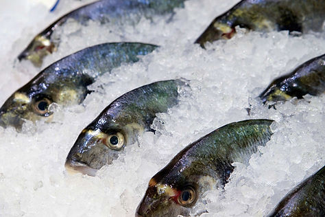 frozen-fish-stock-finance.jpg