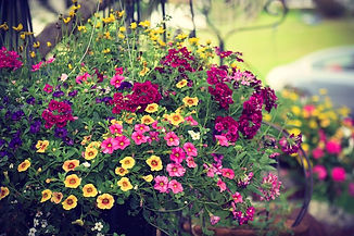 potted plants 5.jpg