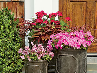 potted plants 4.jpg