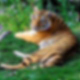 INDIA TIGER 250X250.jpg