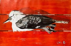 Kookaburra on Red