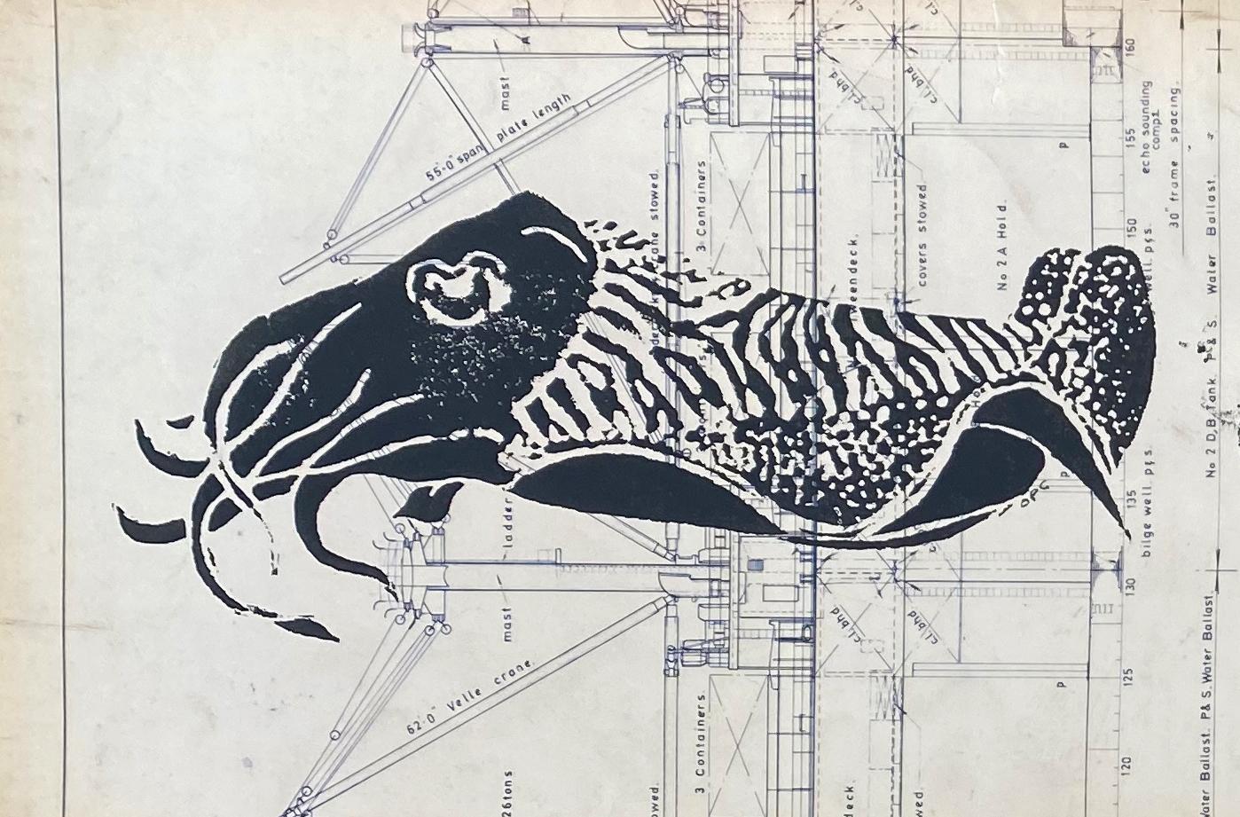 cuttlefish-card3