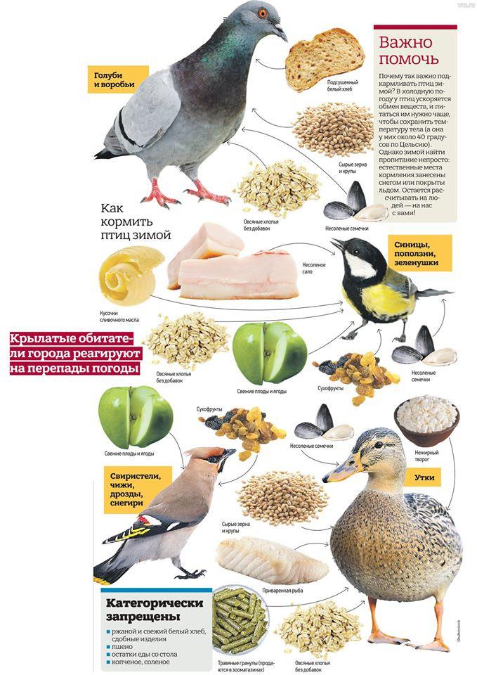 Покорми птиц