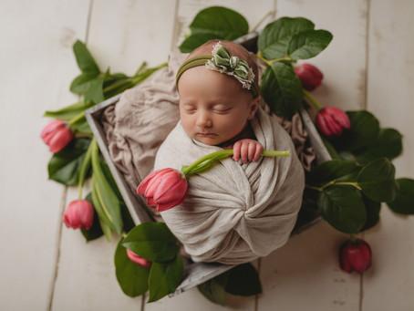 Kansas City Newborn Photographer   Bellamy's Newborn Session