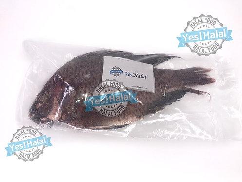 Frozen Tilapia (1 Fish, 800g)