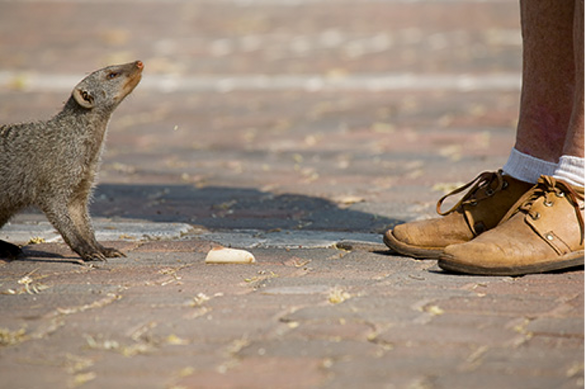 petes shoes and mongoose.png