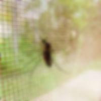 Москитные сетки, Заказать москитные сетки, купить москитную сетку, москитные сетки Оренбург, ремонт москитной сетки, крепления для москитной сетки, ручки для москитной сетки, недорогие москитные сетки, москитные сетки Экодолье