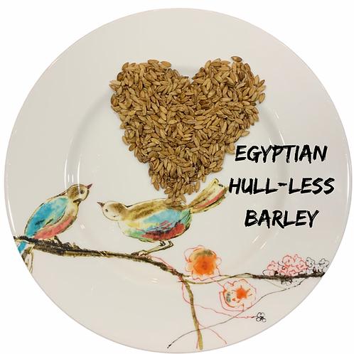 Egyptian Hulless barley