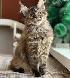 Вымыть запах кошачьей мочи