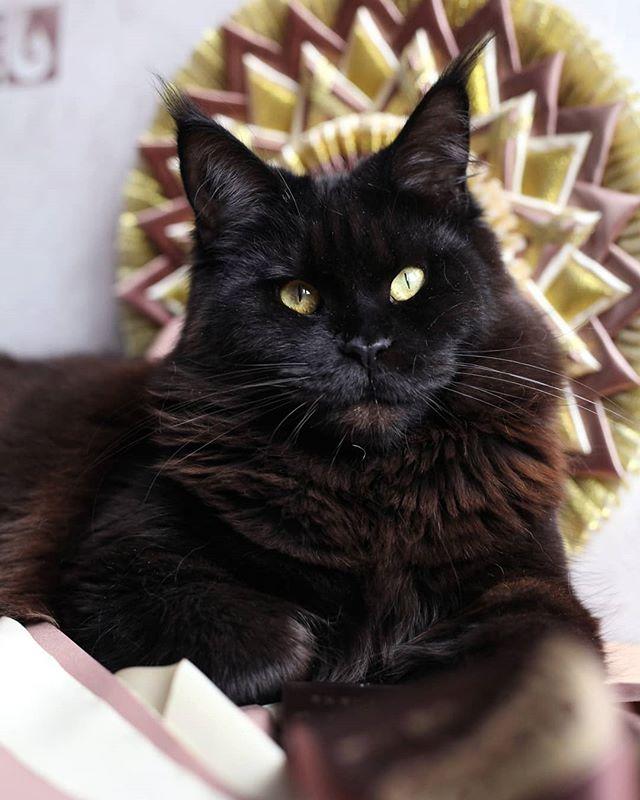 Черная кошка ..