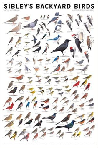 Sibley Birds.jpg