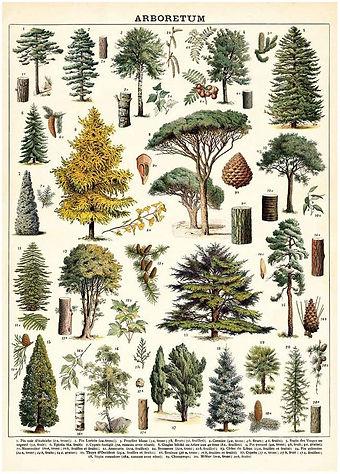 Cavallini Trees.jpg