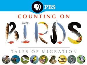PBSBirds.jpg