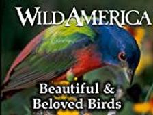 WildAmerica.jpg