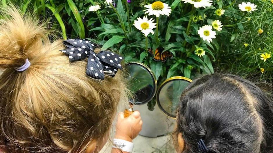 Butterflies Exhibit
