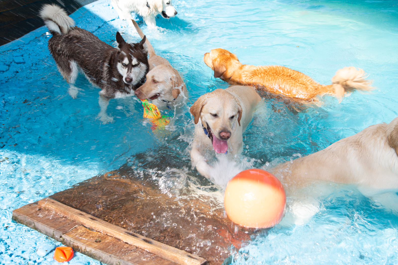 Outdoor Dog Pool