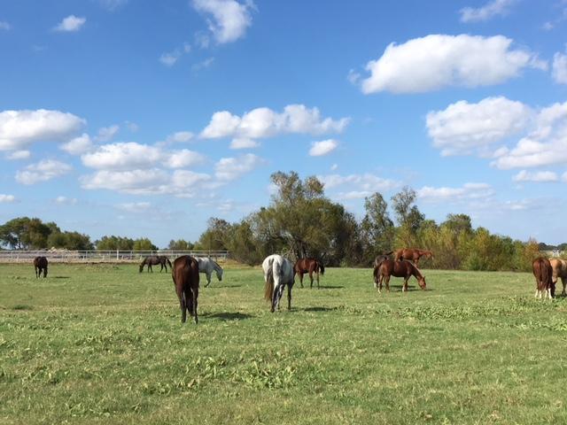 horses grazing2.JPG
