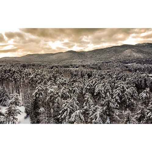 Winter Timber   16x20 Print