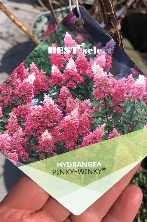 Hydrangea 'Pinky Wincky' - 5L