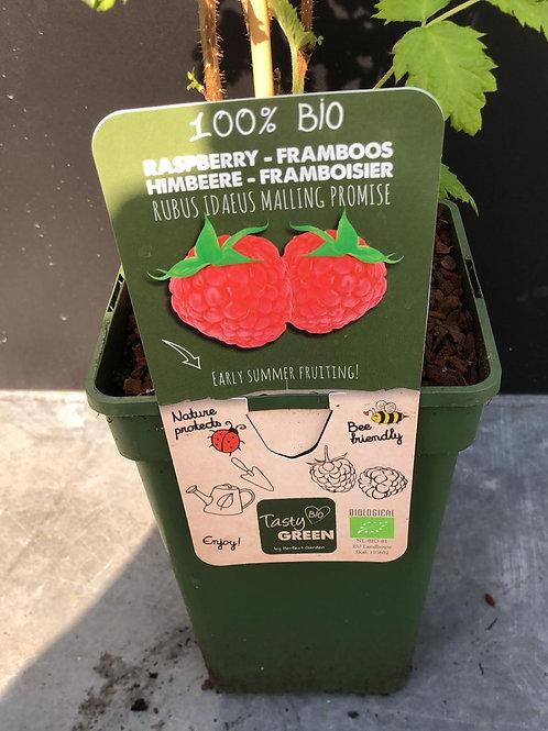 Framboos - Rubus Idaeus Mailing Promise