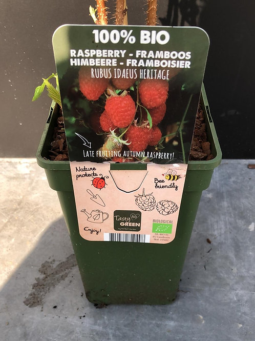 Framboos - Rubus Idaeus Heritage