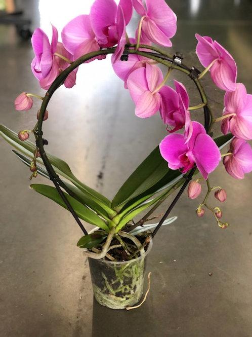 Orchidee boog paars