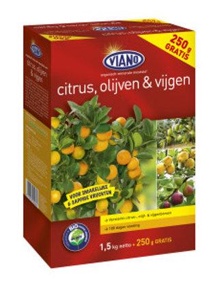 Citrus, olijven en vijgen 1.5kg +250 gr gratis