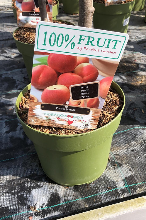 Perzik Prunus persica - laagstam