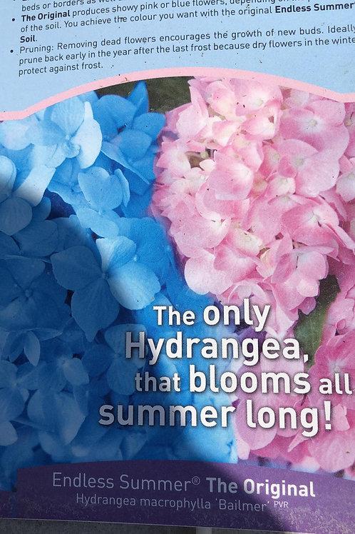 Hydrangea macr. 'Bailmer' - Endless Summer The Original'